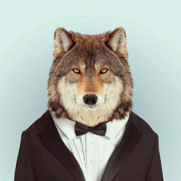 Животни с дрехи