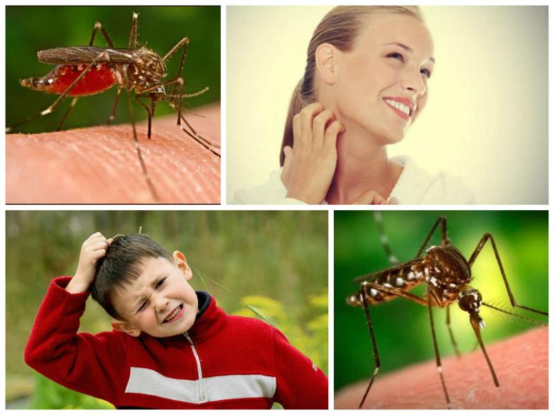 Защо комарите ви хапят повече от другите около вас?