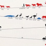 animals-live