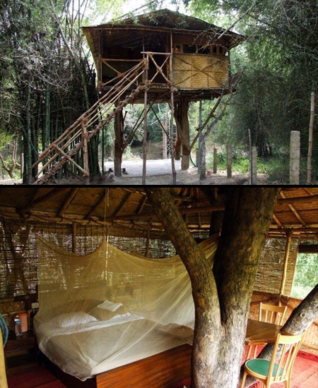 Treehouse Hotel in India